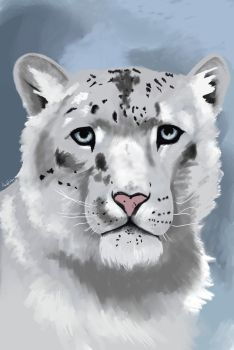 Snow Leopard by buetly