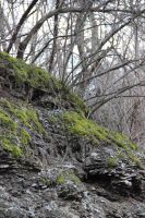 Moss Rocks by DakotaBailey