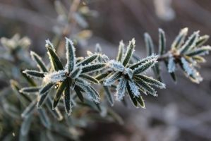 Frozen Green by Lyrak