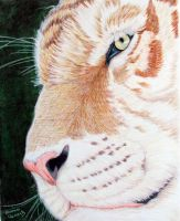 Golden Tiger by ShannonClements