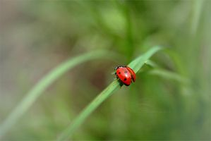 Ladybird, ready to fly by MissLoungegirl