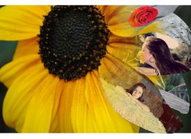 Sunflower collage by JackFrost84