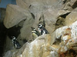 Penguins by Alcyone07