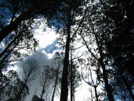 Darkness in the trees by Sleec
