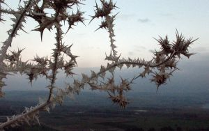 Spiky Death Plant by flamingfish