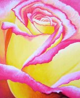 Yellow Pink Rose brighten by angelskissme
