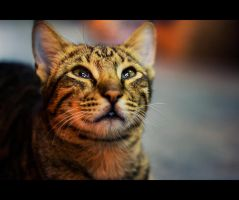 Urban Cats - 53 by MARX77