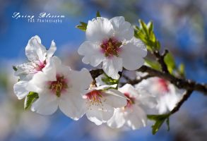 Spring Blossom I. by PetydeNecro