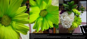 Lime Green Flower Arrangement Stock by Melyssah6-Stock