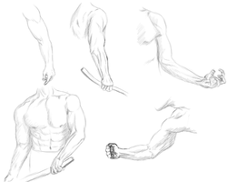 Male Anatomy 1 - Arms by mapal