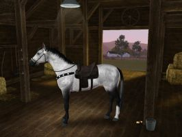 Sims3 Pets Fleabitten Grey Horse by Senwolf10