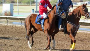 Racehorse Stock 63 by Rejects-Stock