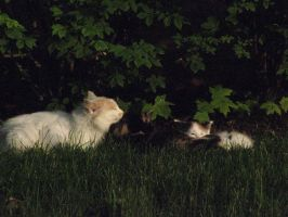 Rest Area Cats by BerylAlexandros