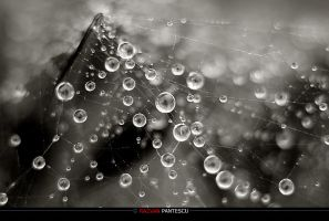 Drops 7 by razvanx