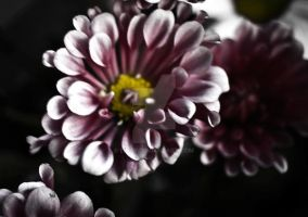 impression on a daisy by eipar