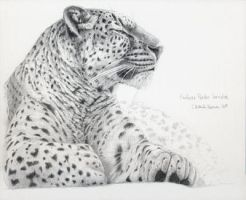 Persian Leopard by sschukina