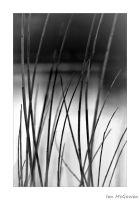 Rustle in the reeds . by 999999999a