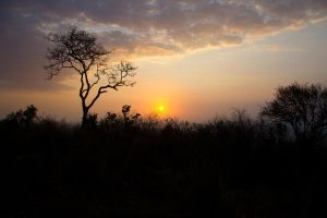 Sunset over the Savanna I by DeviantTeddine