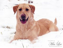 Snow Dog by MiaLeePhotography