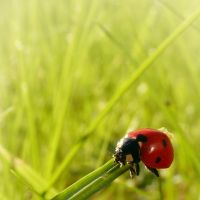 LadyBird by anneclaires