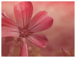 pinkPink by floina