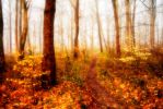 Enchanted Forest by Capturing-the-Light