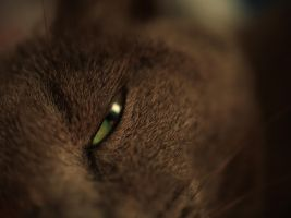 Sleepy eye by The-Underwriter