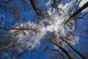 Cloud Trees by perost