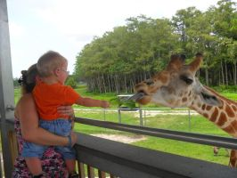 Giraffe feeding by Eviecats