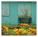 Colorful Springtime by 51ststate