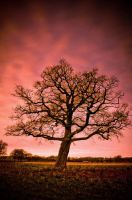 The Wonder Tree by Dave-Ellis
