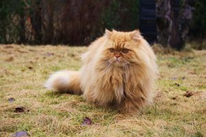 King Of the Neighborhood by Diffethan