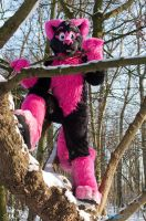 Pinky in a Tree by FotoFurNL
