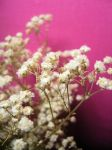little white flowers fuxiaback by erykucciola-sToCk