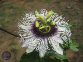Exotic Flower by BleuLilo
