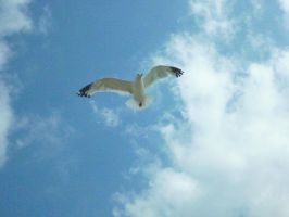 Seagull Stock 1 by Orkiss