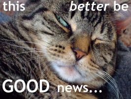 good news lolcat by fusinfun