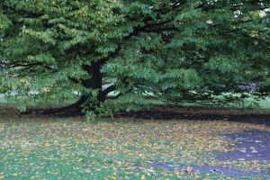 Autumn fallen leaves. by asaluiphotography