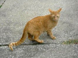Cat Stock 30 by Orangen-Stock