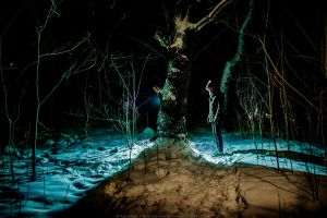 A Forest by OloS