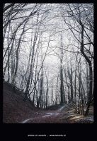Cold woods by Leconte