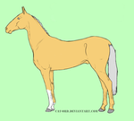 Palomino Akhal-Teke Open by Shasta-Shop
