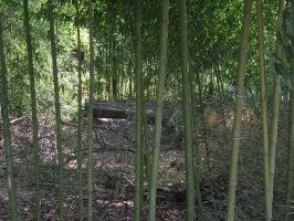 Bamboo Thicket 2 by Nept