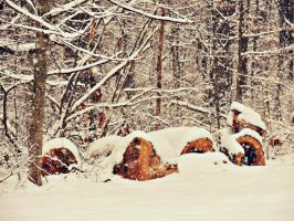 Snow-Covered Logs by TemariAtaje