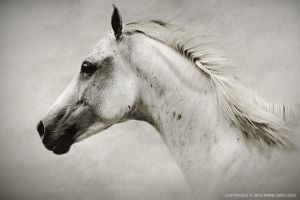 The White Horse by 54ka