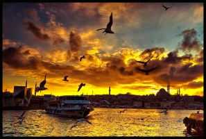 seagull dance by 1poz