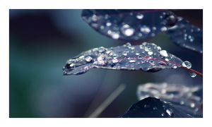 autumn droplets II by Ythor