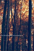 Autumn . .. by light-from-Emirates