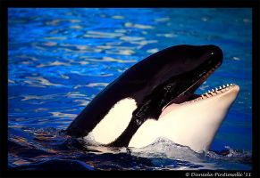 Happy Orca by TVD-Photography