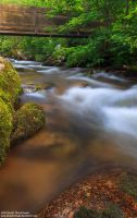 Black Forest stream by Photomichael